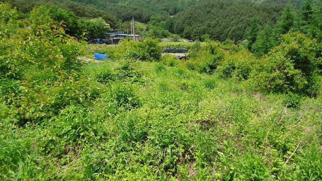 조용한골짜기안주말농장하기딱좋은곳[주변시세이하물건]읍내소요시간7분