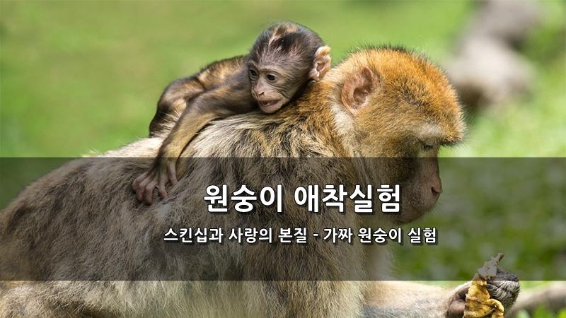 스킨십과 사랑의 본질 - 원숭이 애착실험 가짜 원숭이 실험