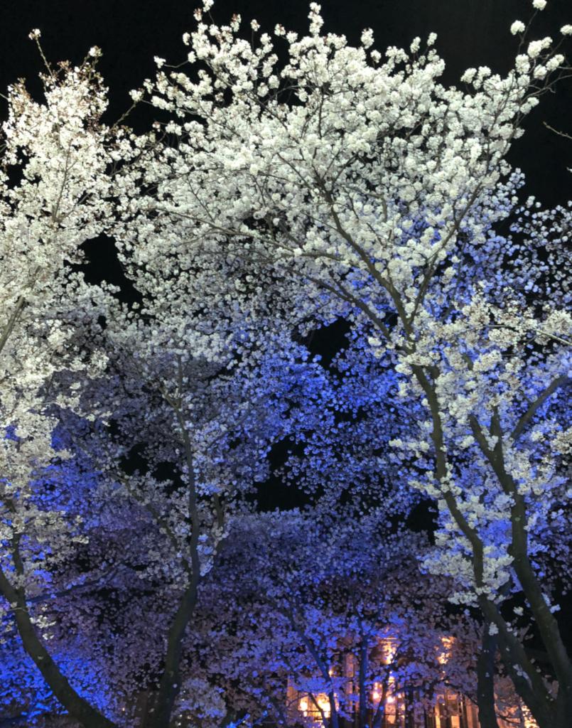 작천정 벚꽃 축제가 끝난 다음날 꽃구경...