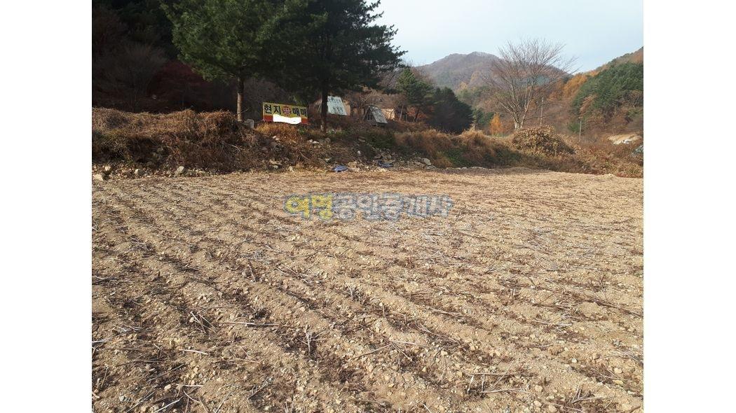 펜션.가든.대박 옛날황토주택66평토지1900평+하천부지국유림접