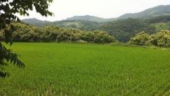 독립성과 사생활보호를 받는 하늘 위에 떠있는 듯한 논과밭
