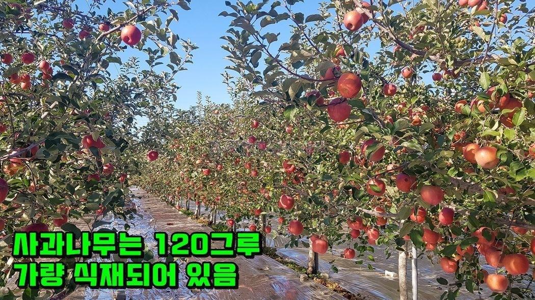 마을 상단부에 자리한 계획관리지역 수익성 영농지(사과농장)
