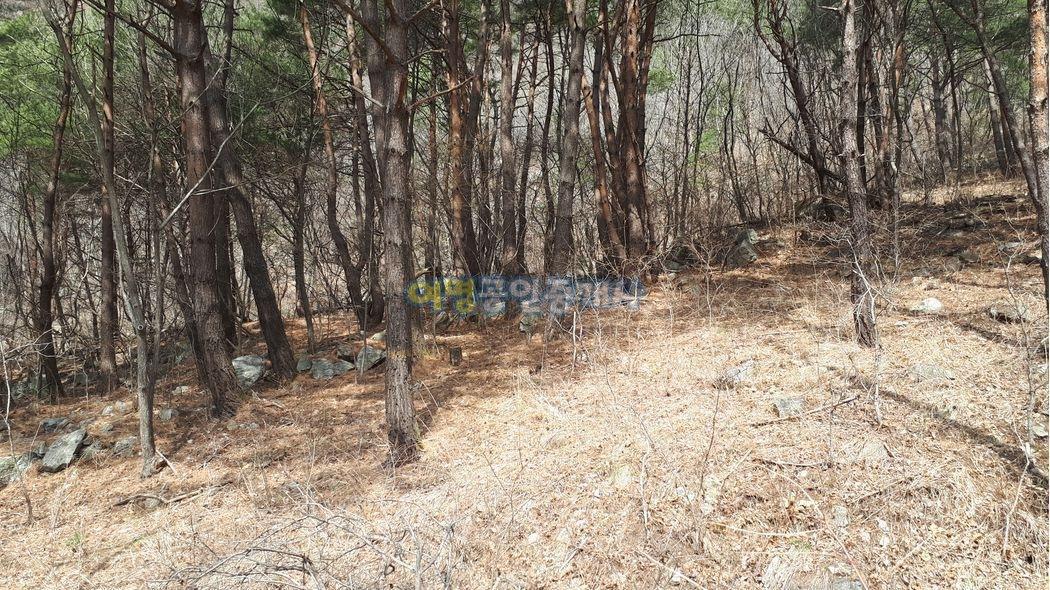 애견펜션수목장후보지 옛날화전밭나홀로위치[청정지역]