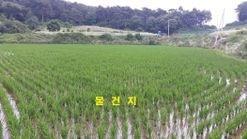 마을 맨 안쪽, 한적한 곳에 저렴하게 나온 급매물 토지