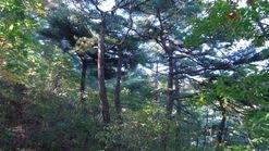 대지190평산1200평(월운리산40-3)5미터도로