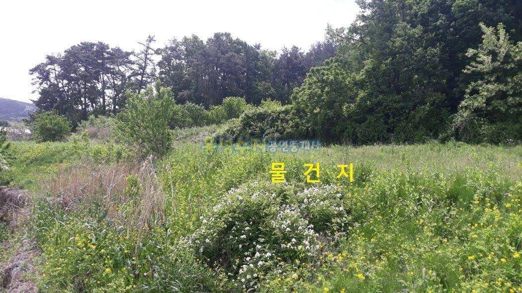 산자락 바로 밑에 양봉이나 약초재배하기에 알맞는 토지