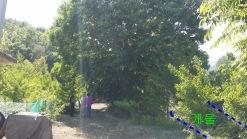 대형 느티나무가 여름철 그늘막이 됨