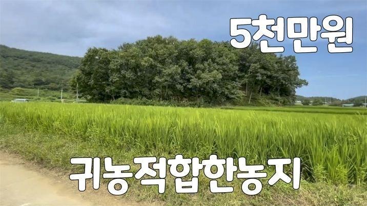 시골 한적한 곳의 논 농지원부가능한 소액의 귀농용 토지 추천