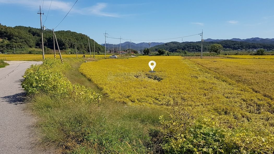 마을포장도로와 접하고 있는 접근성 좋은 영농지