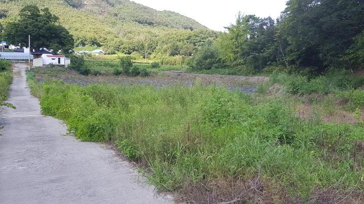 개울을 끼고있는 작은 밭.하천땅 오십평  공짜로사용