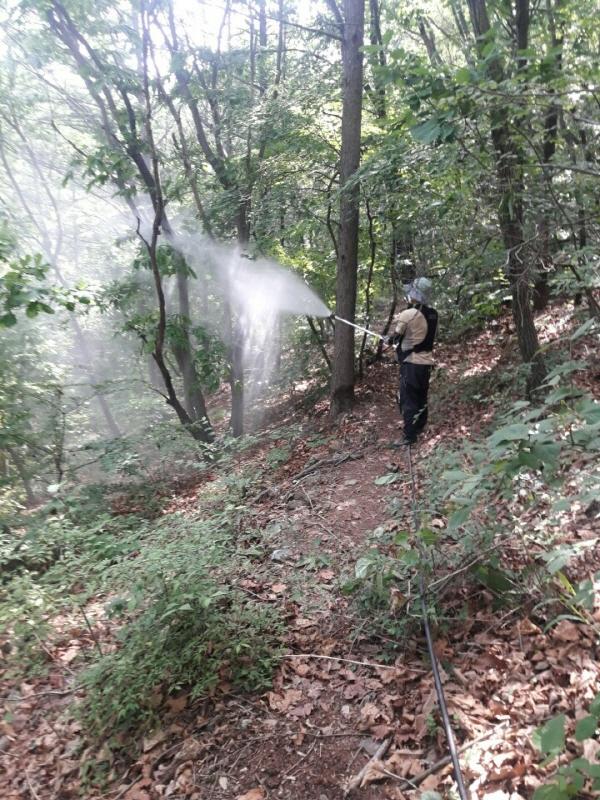 김포시, 미국선녀벌레 등 약충 중점적 산림방제 실시