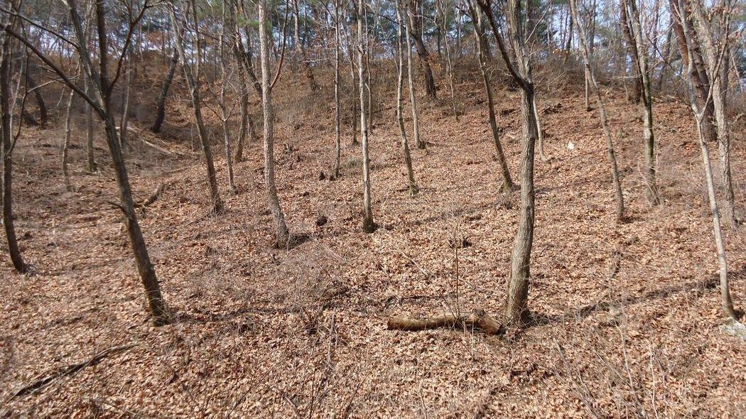 국유림접한1급수계곡장뇌삼재배최적지[요양지역]보전관리지역