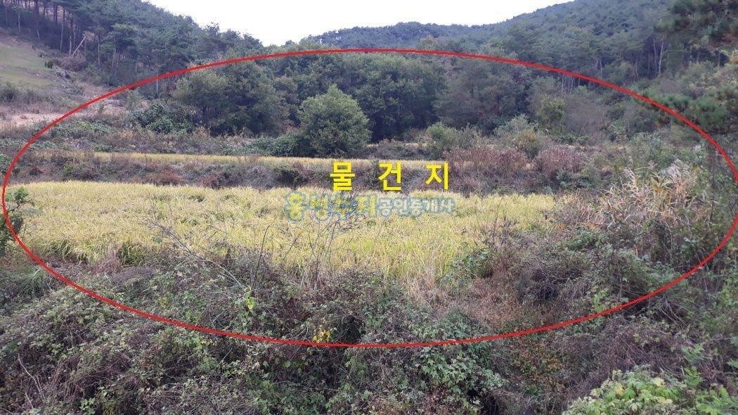 완~전 호젓한 곳, 엄청 저렴하게 나온 커다란 귀농용 토지
