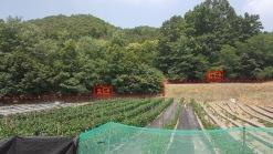 산자락 아래 위치한 평평한 계단형 밭