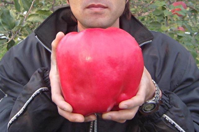 비싼 과일, 세카이이치 사과, 매일꿀정보