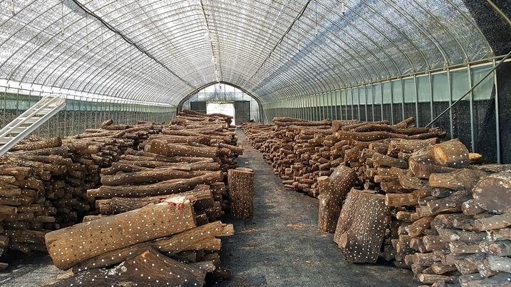면소재지 인근 잘지어진 수익성 버섯재배사