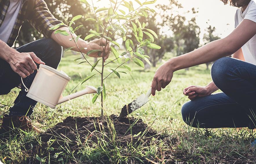 누구나 쉽게 도전하는 식물 키우기!