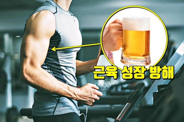 운동후 술마시면 안되는 이유, 근손실, 근성장, 다이어트, 건강