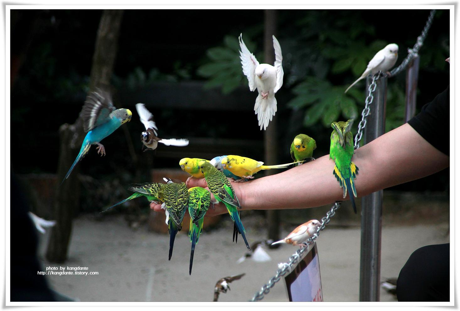 퍼스트가든에서 새들과 교감할 수 있는 새 모이 체험