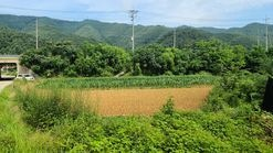 서울서 홍천 오는 길목에 있는 보호구역 전 242평