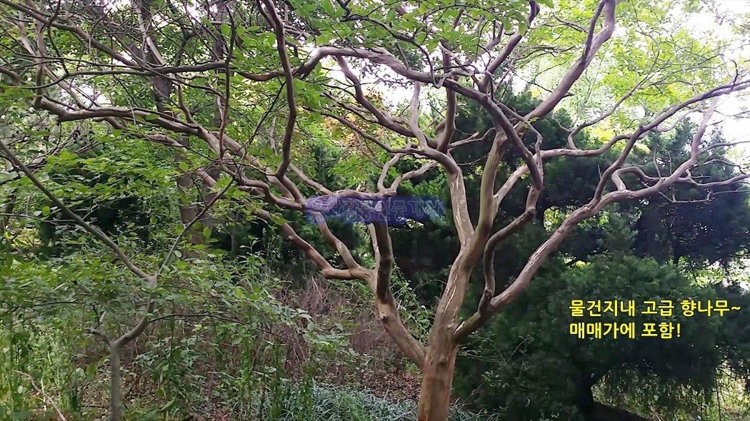 보령시대천(바닷가)가 가까운, 계획관리 . 정원수 매매가 포함