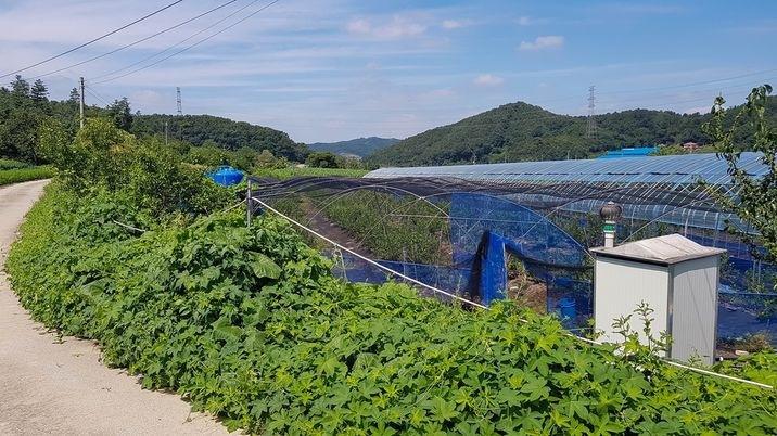 마을 가생이에 자리한 저렴하고 조용한 환경의 토지