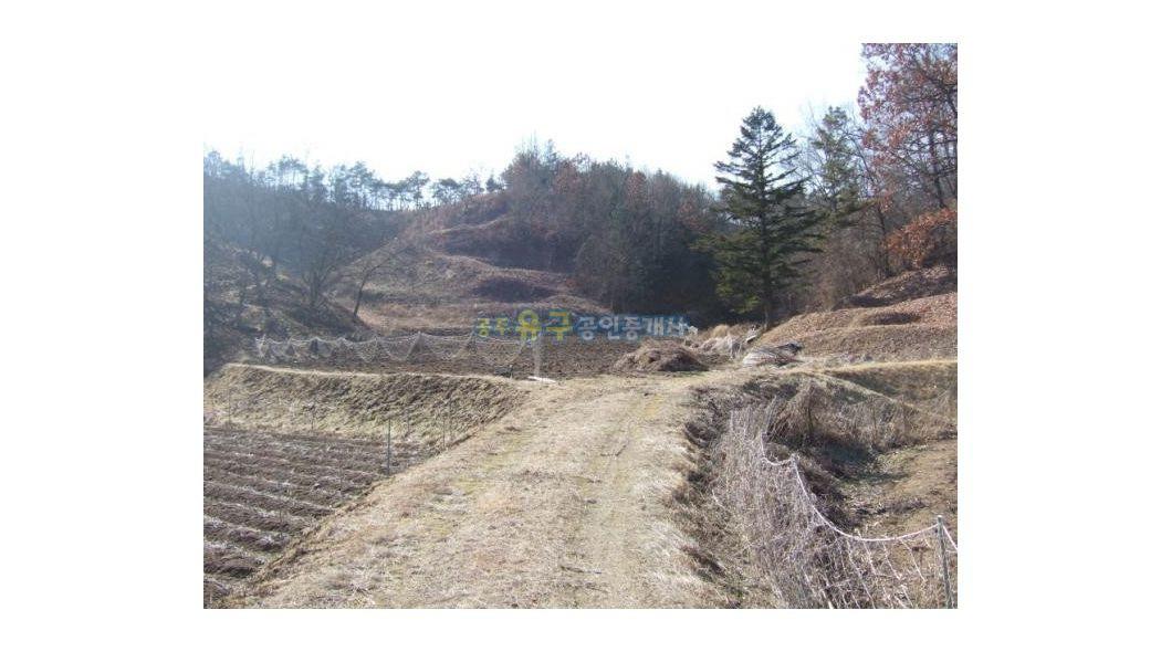 주말농장,묘지(가족묘)