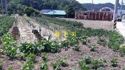 면소재지 같은 마을, 2차선 삼거리에 있는 '대지 327평'
