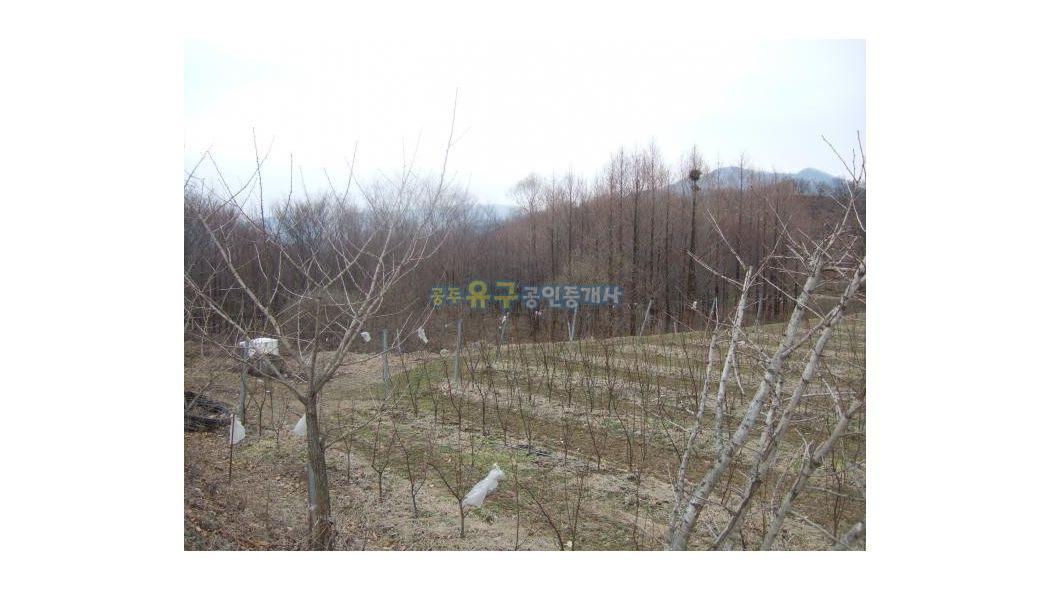 별장,전원주택지,귀농(개발)