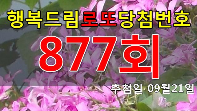 로또877회당첨번호 안내