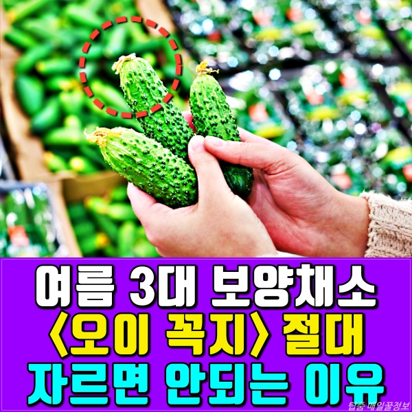 여름 3대 보양채소 오이 꼭지 효능, 항암에 좋은 음식, 붓기 제거, 루테인, 전립선, 건강, 팁줌마 매일꿀정보