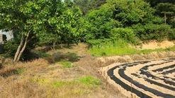 시야가 트인 돌배나무밭 급매  670평