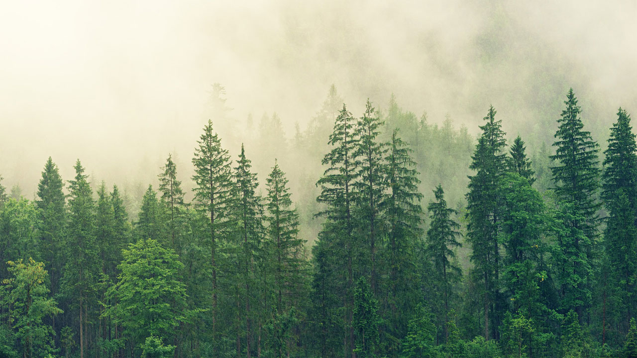 십장생소나무