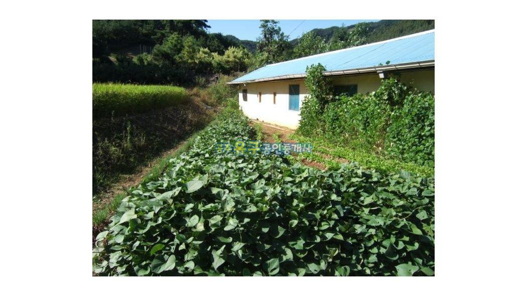시골의 농가주택