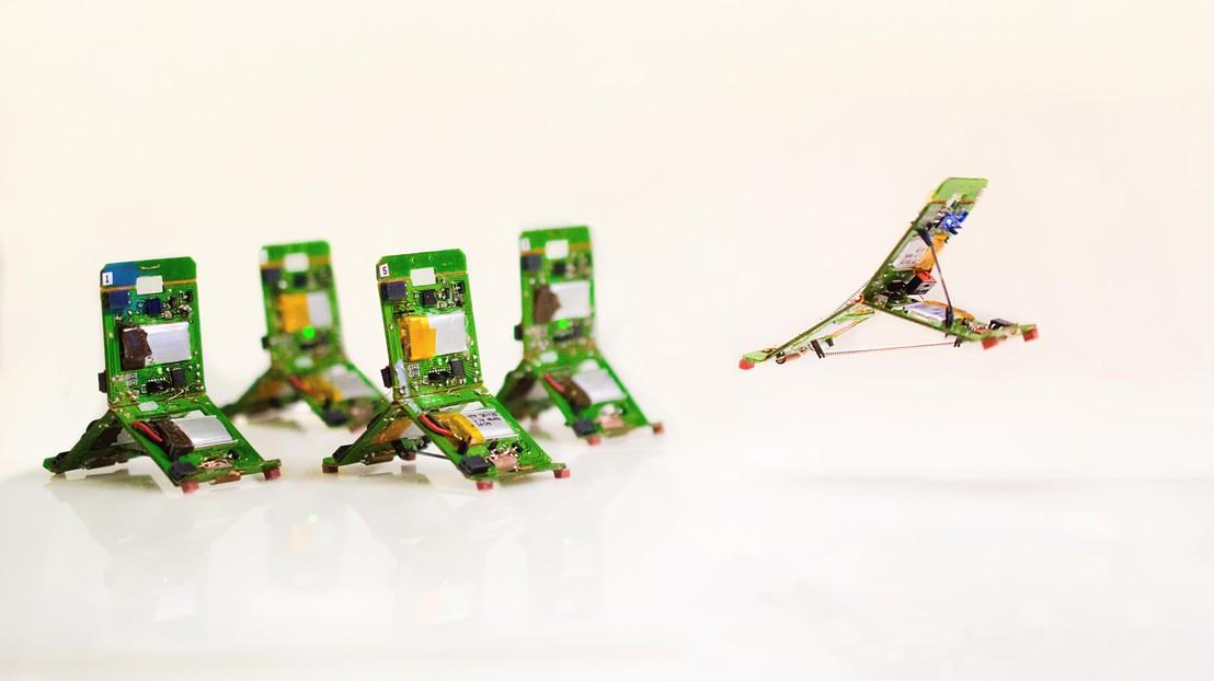 상호 소통, 역할 분담, 공동 협업하는 미니 로봇…EPFL, 개미 모방 로봇 개발