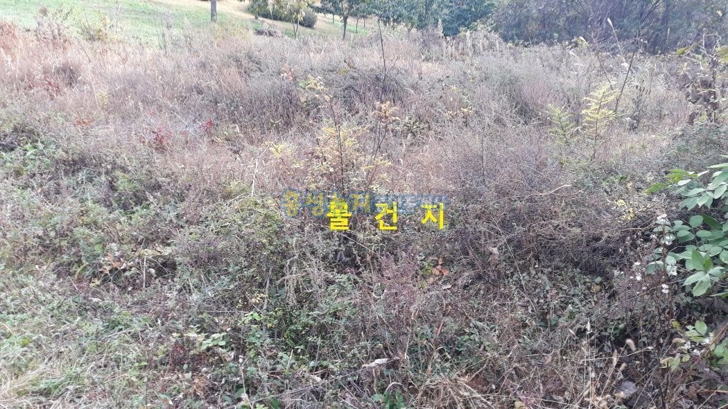 홍성추모공원 근처 명당터,민원(마을)이 전혀 없는 산소자리