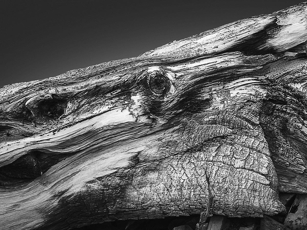 나무에서 발견하는 동물? 심리 사진을 찍는 Jonatan Maldonado 사진작가