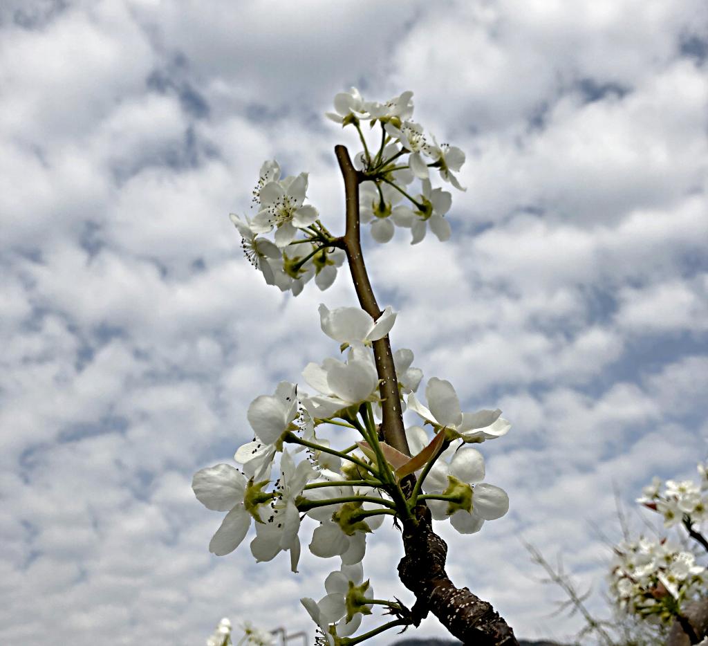 집주변의 봄꽃들...