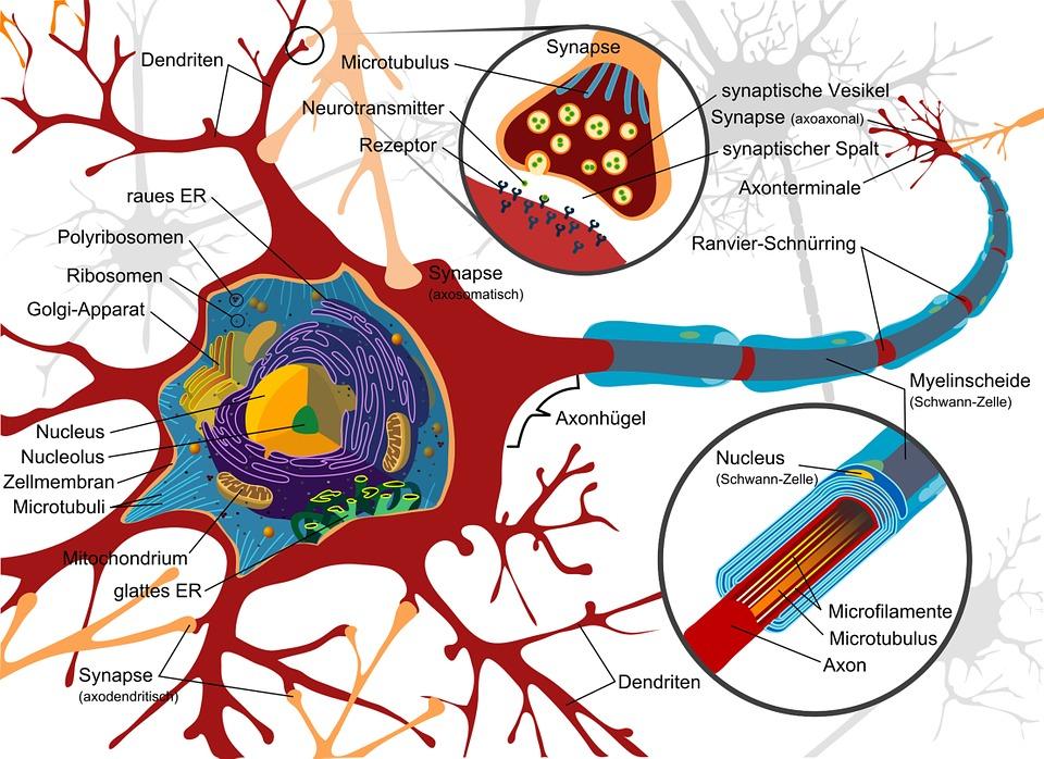 인문과학 - 미러링 피플 (뉴런과 감성의 놀라운 관계)