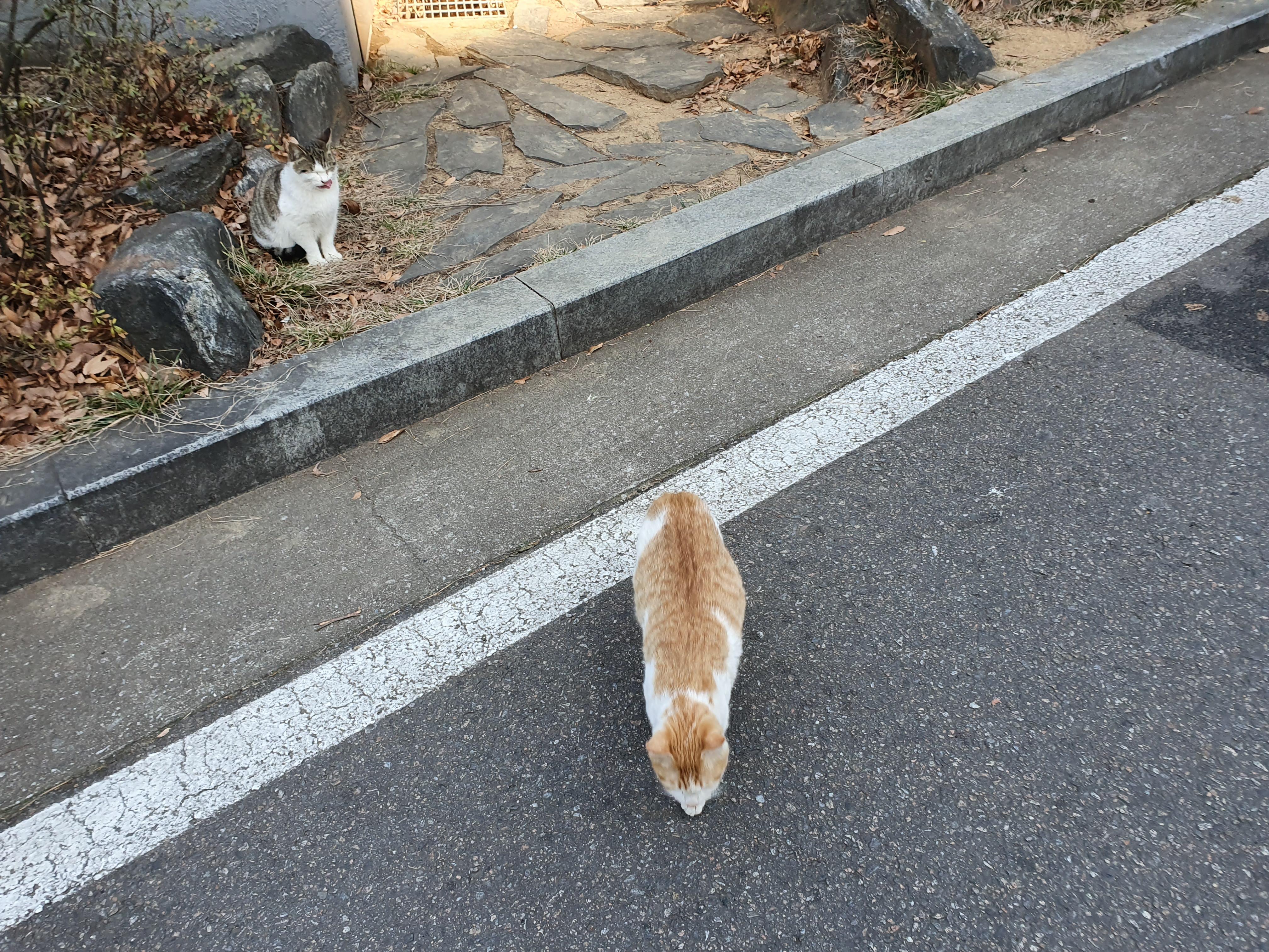동네 고양이