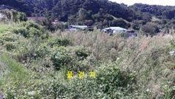 보개산 끝자락에 적당한 크기의 귀농.귀촌용 토지