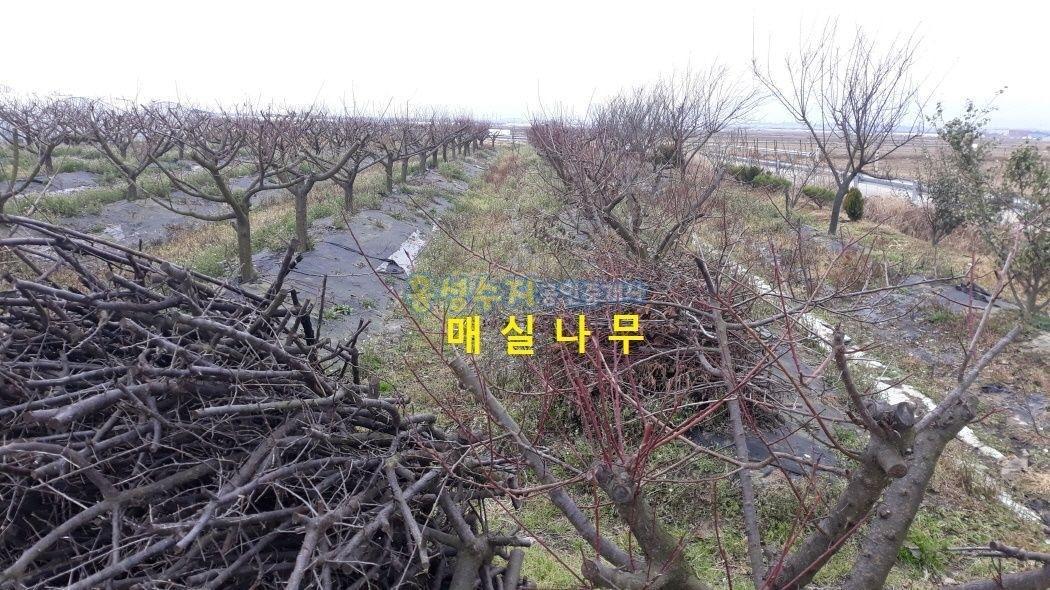 평야가 보이는 곳, 농막이 설치 된 귀촌용 토지