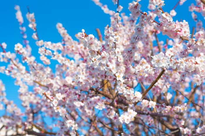 벚꽃 일상 사진이네요 ㅎㅎ
