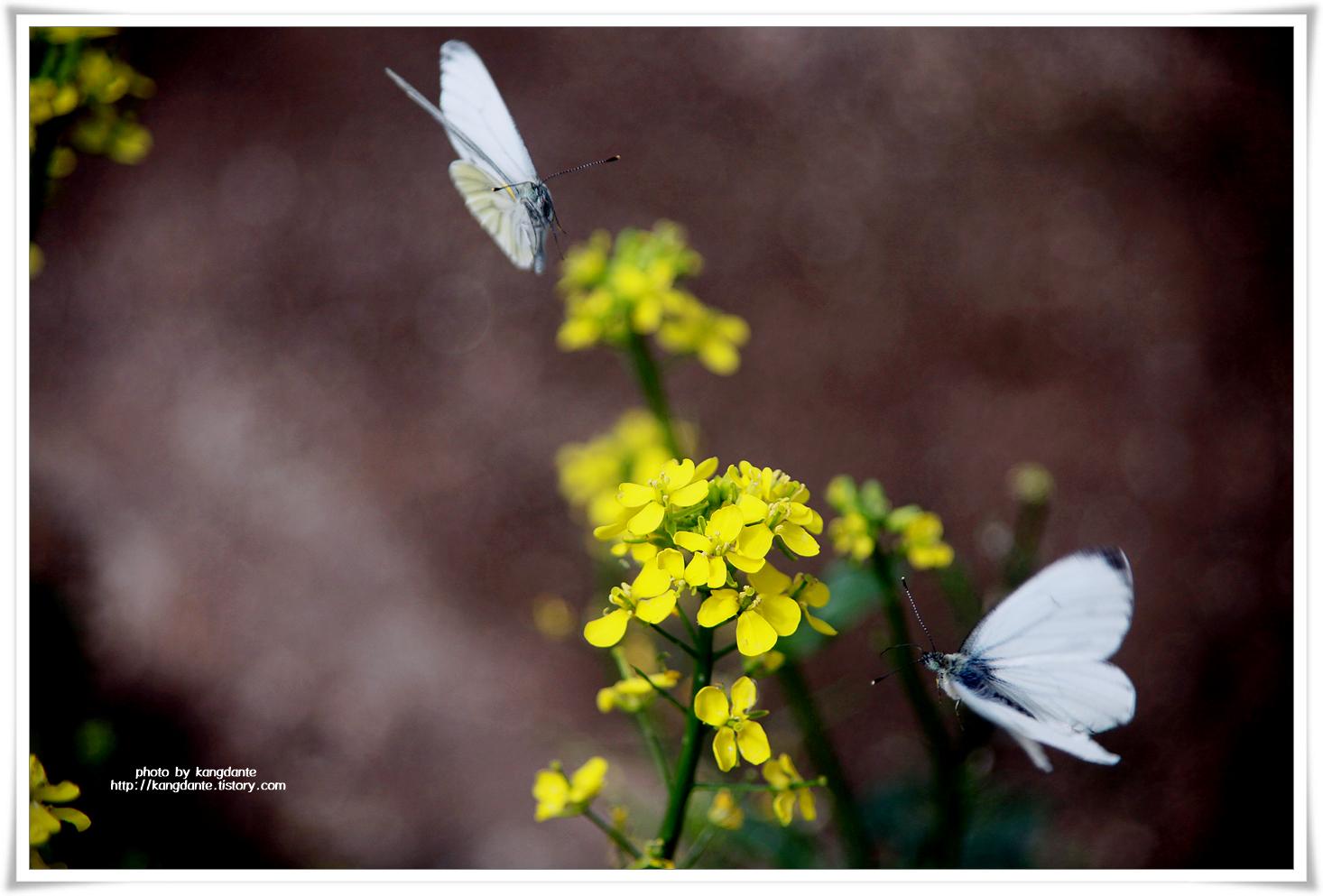 나비들의 비상(飛翔)을 즐길 수 있는 서울숲 곤충식물원