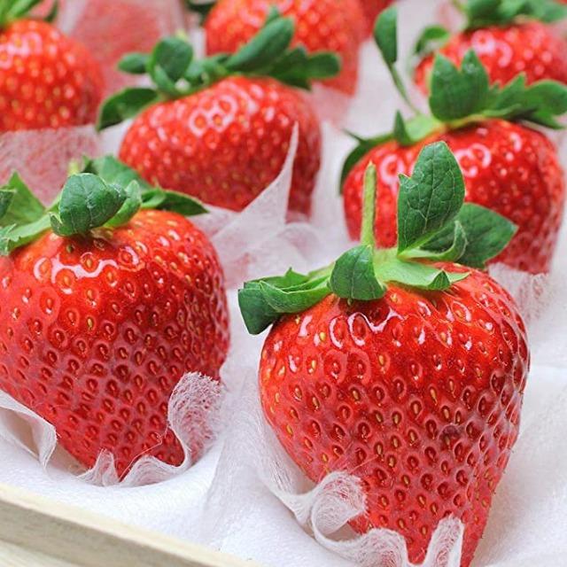 비싼 과일, 셈비키야 딸기, 매일꿀정보