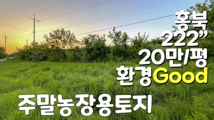 강추 홍북읍 환경 좋은곳 적당한 넓이의 주말농장, 주택지