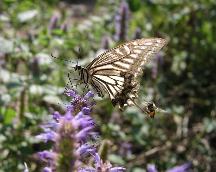 나비와 벌