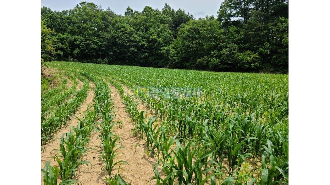삼면이 임야로 쌓여있으며 남향으로 시야가 트인  주말농장 부지