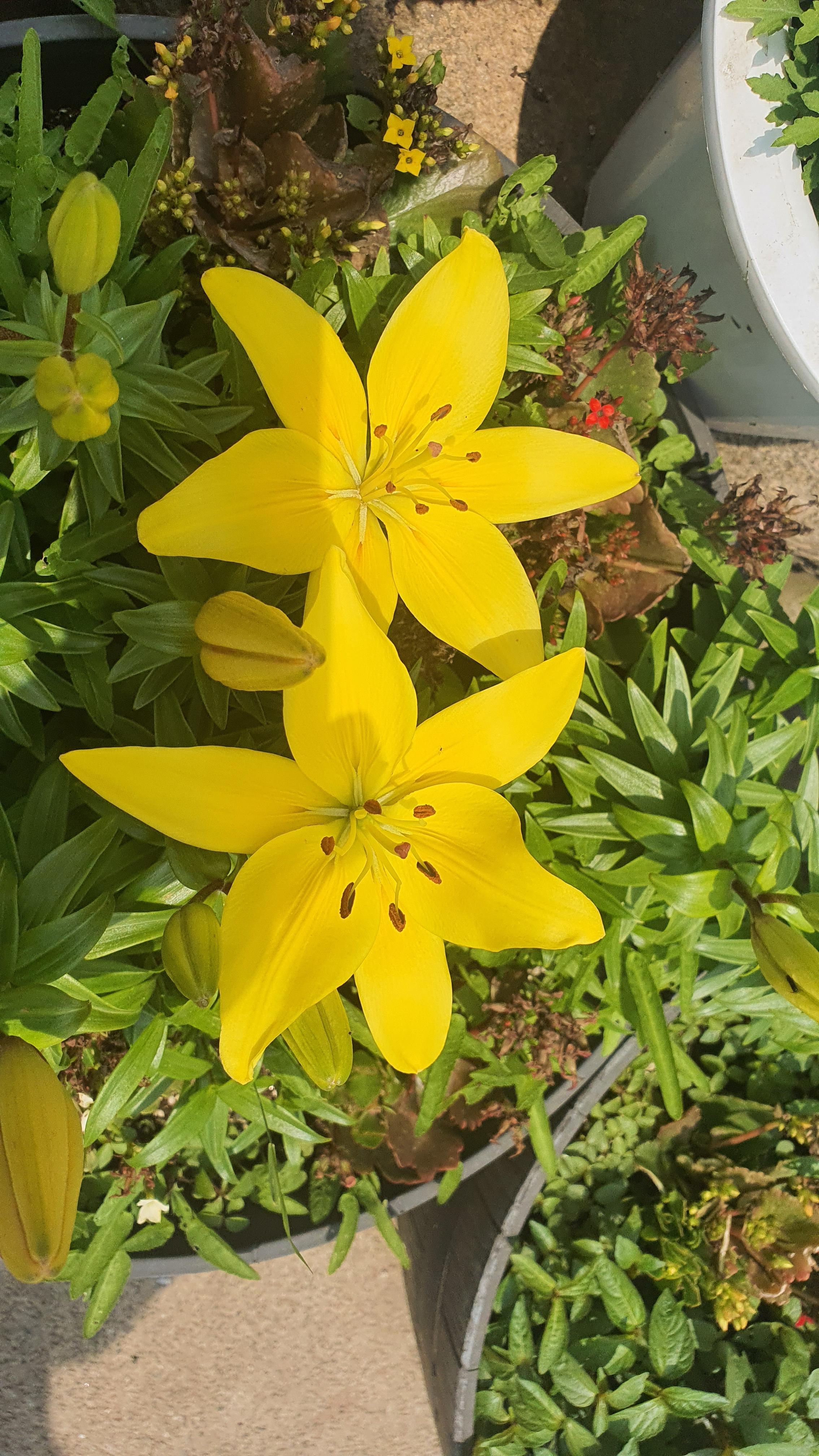 오늘 하루 일과는 꽃과 맛집 그리고 부산으로 향합니다