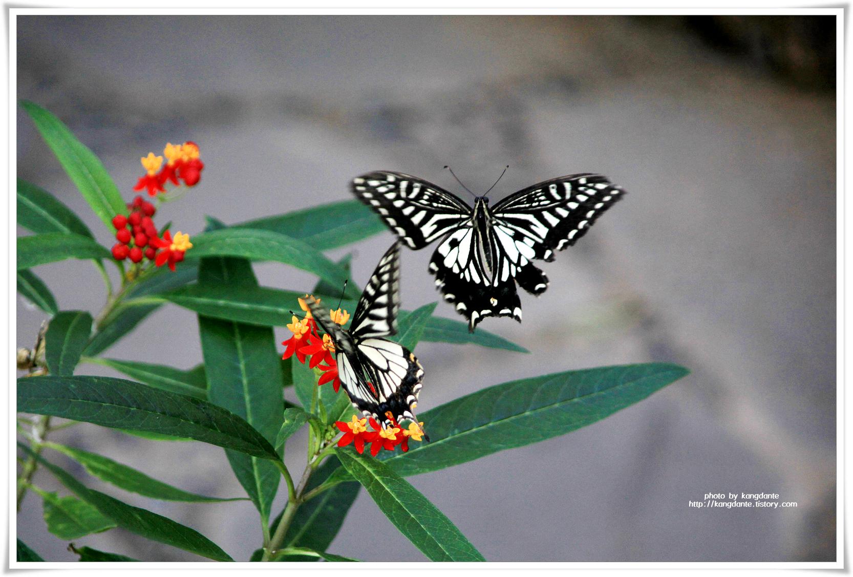 다양한 나비들이 한가로이 노니는 서울숲 나비정원